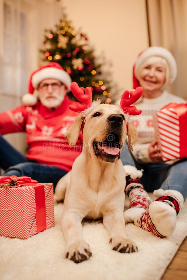 Senior couple with gifts and dog royalty free stock image