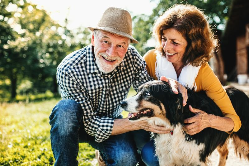 A senior couple crouching and petting a dog. A close-up of a joyful senior couple crouching and petting a dog stock images