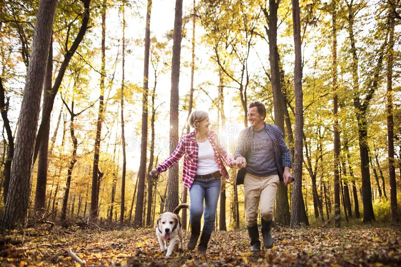 Senior couple with dog on a walk in an autumn forest. stock images