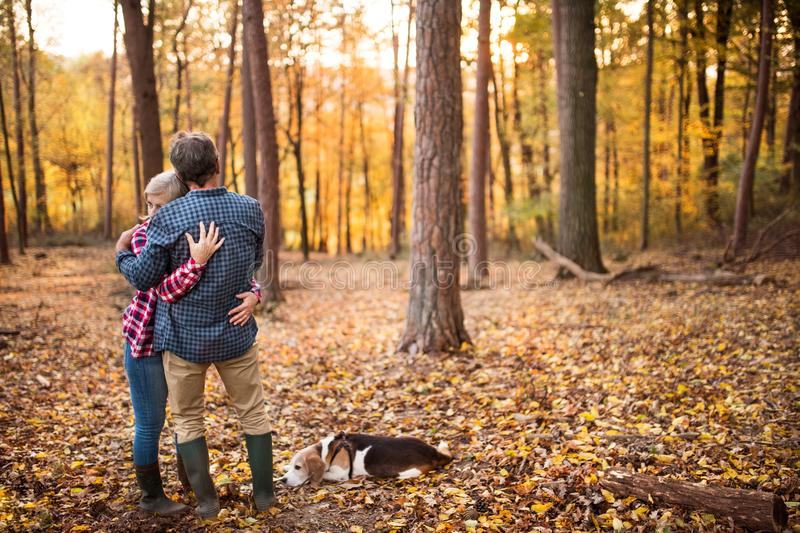 Senior couple with dog on a walk in an autumn forest. stock photography