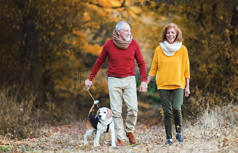 A senior couple with a dog on a walk in an autumn nature. royalty free stock image
