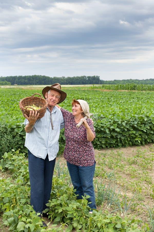 Senior couple on farmland stock image