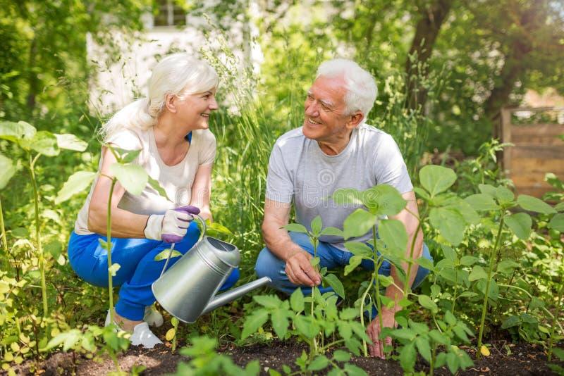 Senior couple gardening. Smiling happy elderly seniors couple gardening stock images