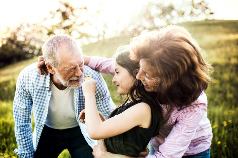 Senior couple with granddaughter outside in spring nature, having fun. An old men sneezing after being tickled with a flower royalty free stock images