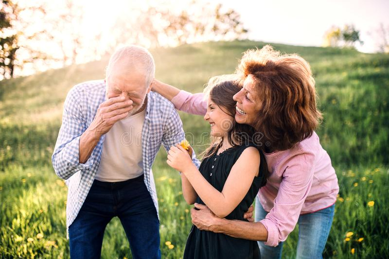 Senior couple with granddaughter outside in spring nature, having fun. An old men sneezing after being tickled with a flower stock photo