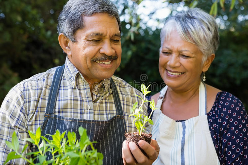 Senior couple looking sapling plant in garden. Happy senior couple looking sapling plant in garden royalty free stock photography