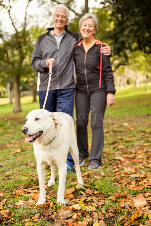 Senior couple in the park with dog royalty free stock photography