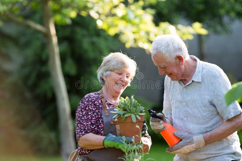 Senior couple potting plants royalty free stock images