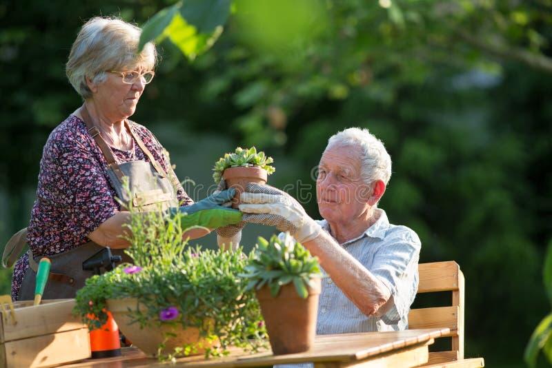Senior couple potting plants royalty free stock photo