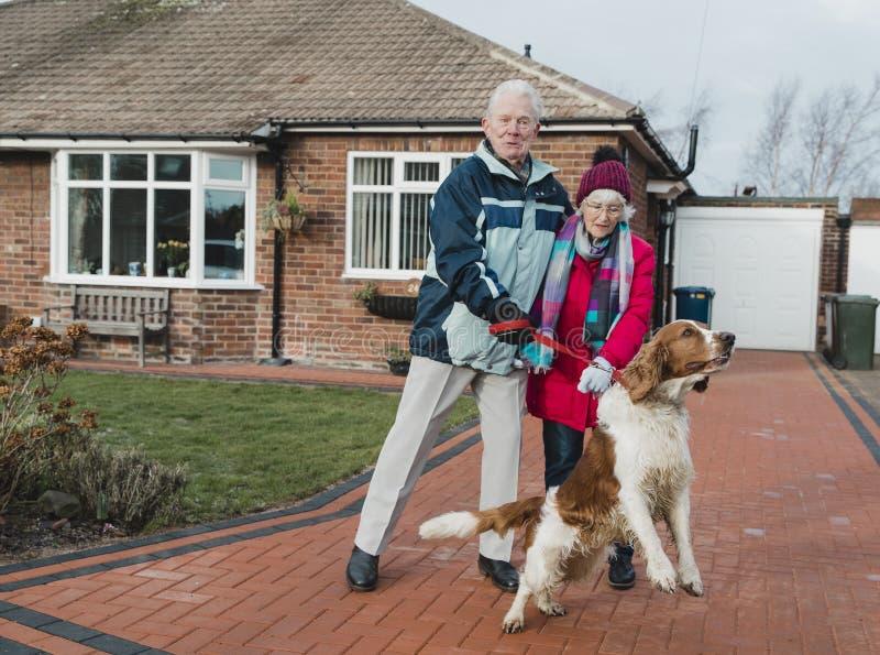 Senior Couple Struggling to Walk the Dog royalty free stock photo