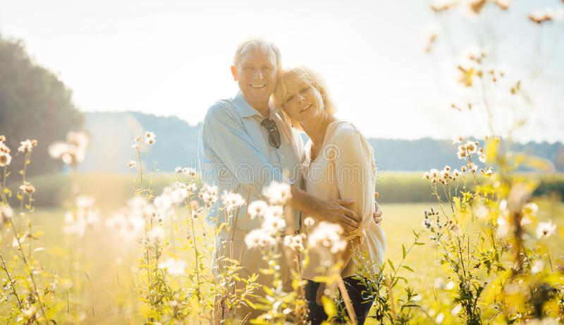 Senior couple on a sunlit meadow embracing each other. Looking at the camera royalty free stock photography