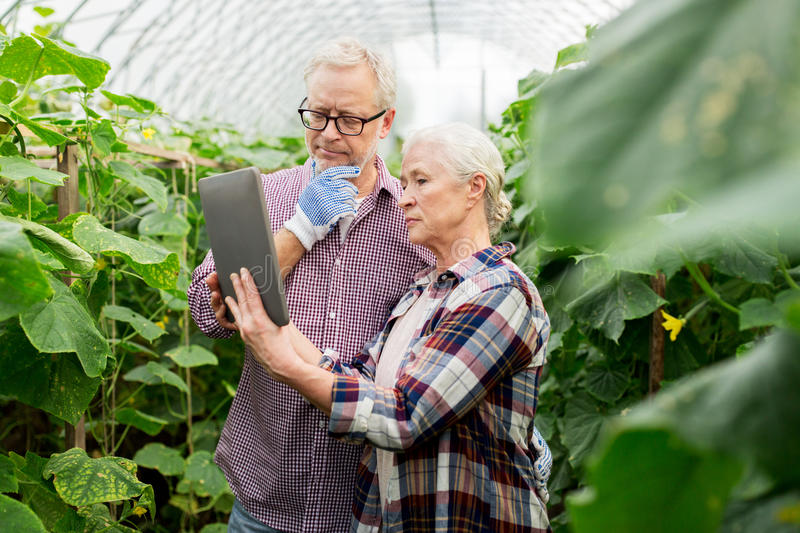 Senior couple with tablet pc at farm greenhouse royalty free stock photo