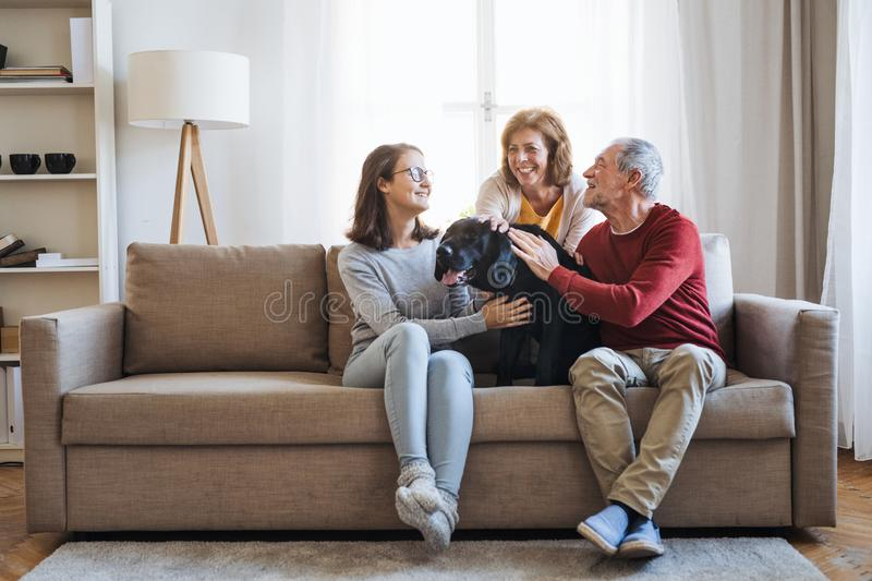 A senior couple with a teenage girl sitting on a sofa with dog at home. A senior couple with a teenage girl sitting on a sofa with pet dog at home royalty free stock photos