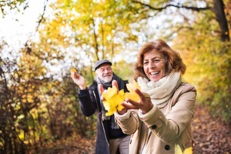 Senior couple on a walk in a forest in an autumn nature, holding leaves. Senior couple on a walk in a forest in an autumn nature, holding yellow leaves stock image