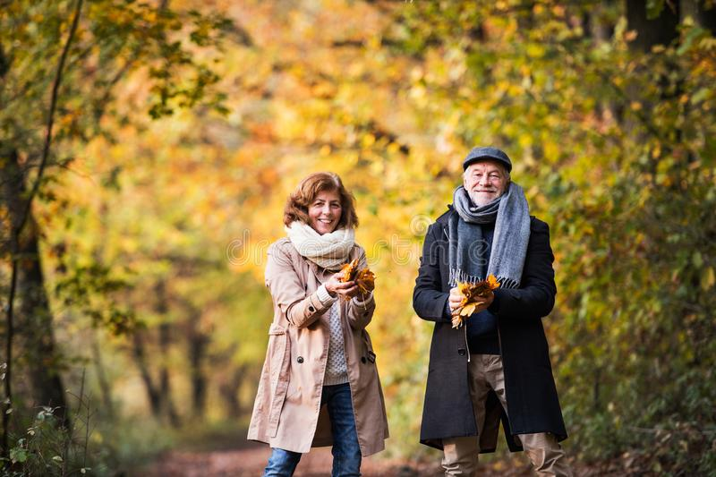 Senior couple on a walk in a forest in an autumn nature, holding leaves. stock photos