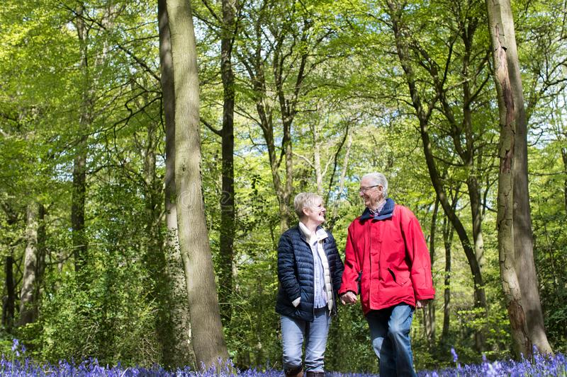 Senior Couple Walking Hand In Hand Through Bluebell Wood. Senior Couple Walk Hand In Hand Through Bluebell Wood stock images