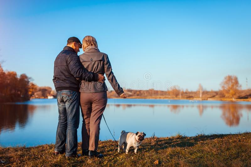 Senior couple walking pug dog in autumn park by river. Happy man and woman enjoying time with pet. Senior couple walking pug dog in autumn park by river. Happy stock photos