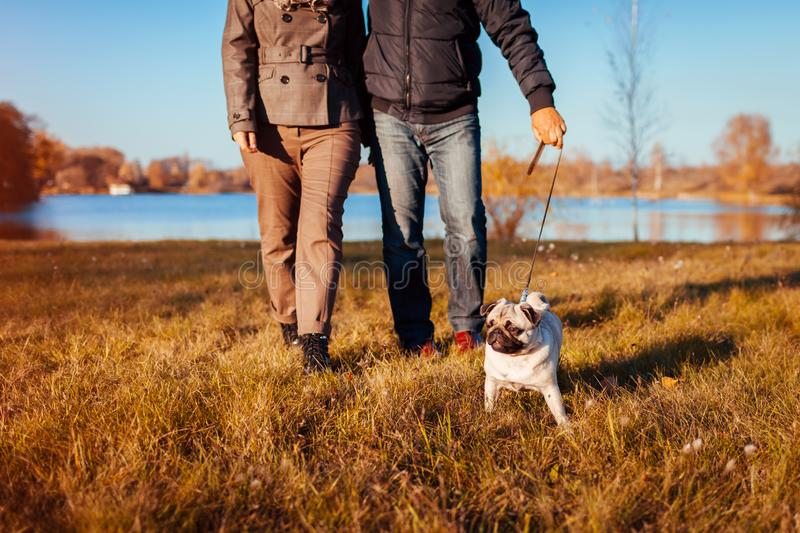 Senior couple walking pug dog in autumn park by river. Happy man and woman enjoying time with pet. royalty free stock image