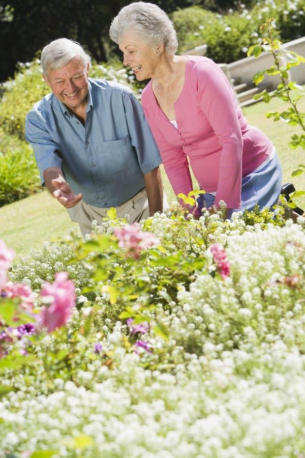 Download Senior Couple Working In Garden Stock Photo - Image of retired, happy: 5113996