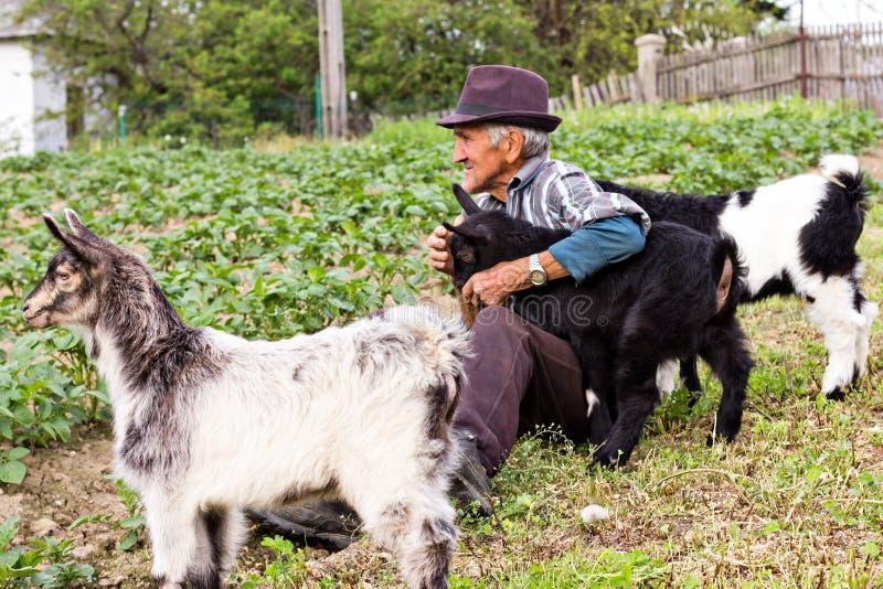 Senior farmer with three baby goat royalty free stock image