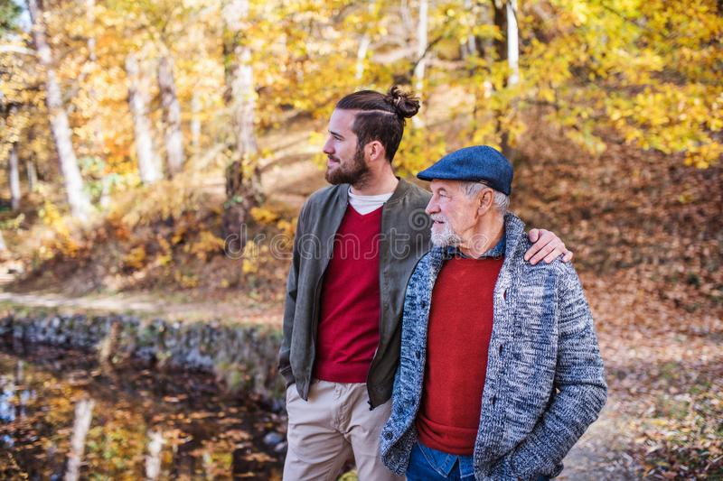 Senior father and his son walking in nature, talking. stock photo