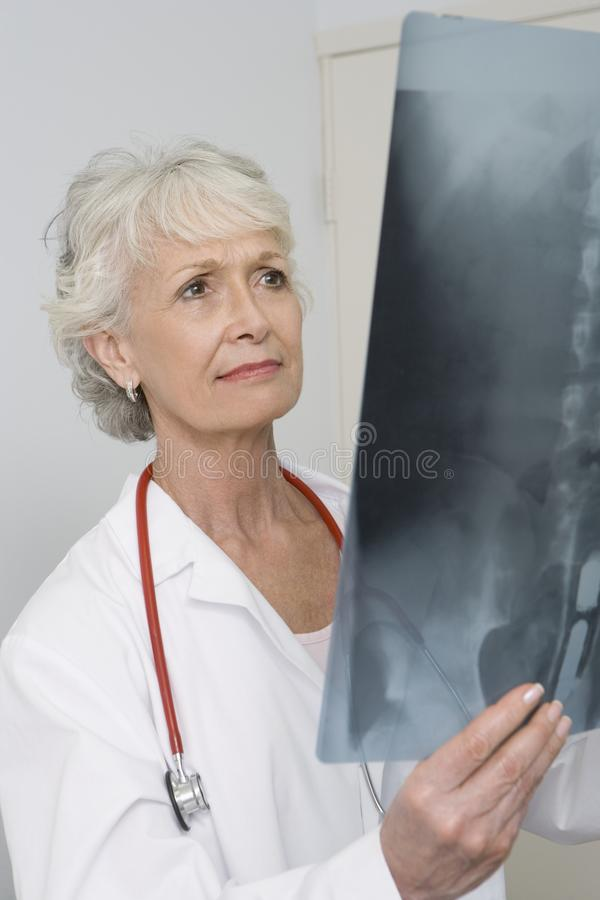 Senior Female Doctor Analyzing X-ray Report. A Caucasian female doctor analyzing the x-ray report in clinic stock photography