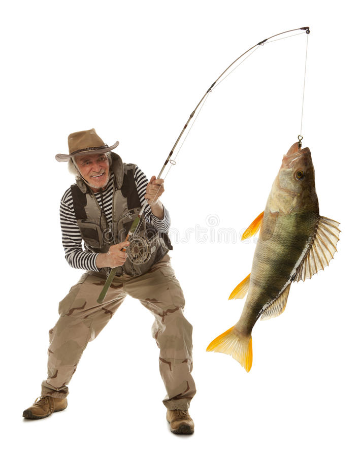 Senior fisherman with big fish - perch (Perca fluviatilis) isolated stock photo