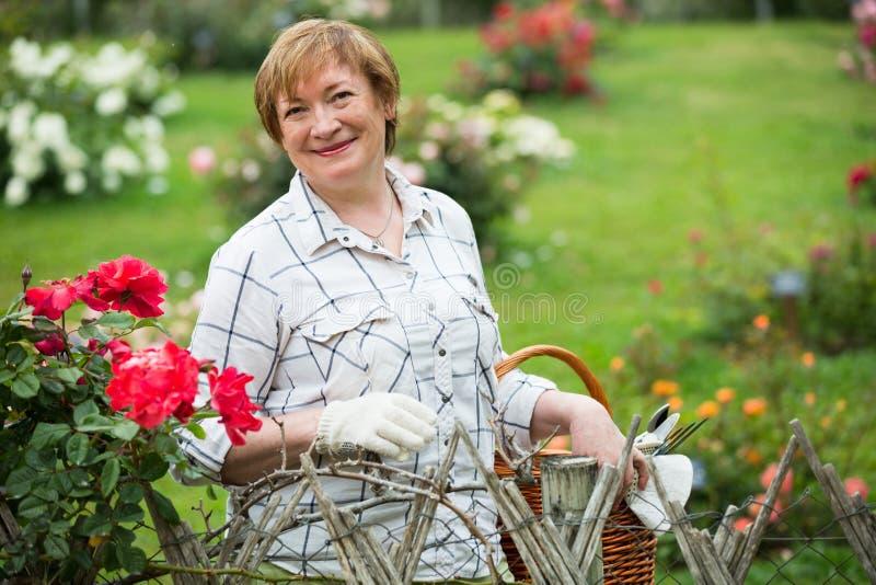 Senior gardener basket stock image