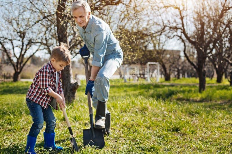 Senior gardener and his grandson digging ground together royalty free stock image
