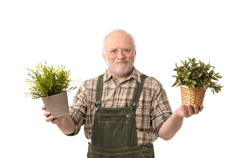 Senior gardener holding plant smiling stock images
