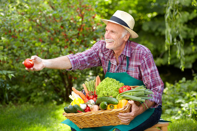Senior gardener is presenting a basket with vegetables stock photos