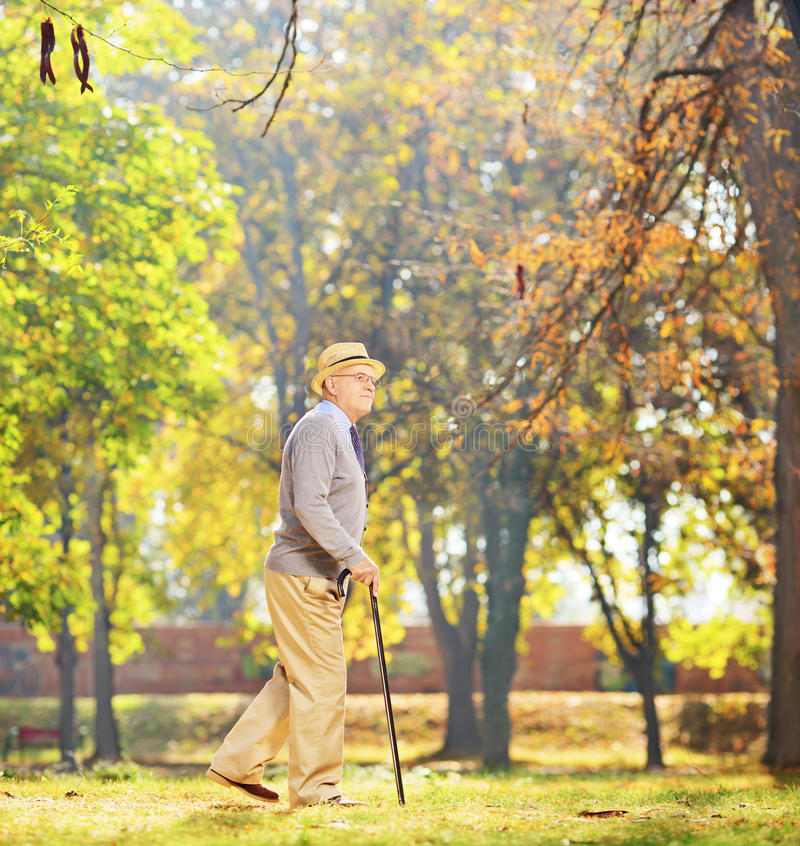 Senior gentleman walking with a cane in a park. Full length portrait of a senior gentleman walking with a cane in a park, shot with a tilt and shift lens stock photos