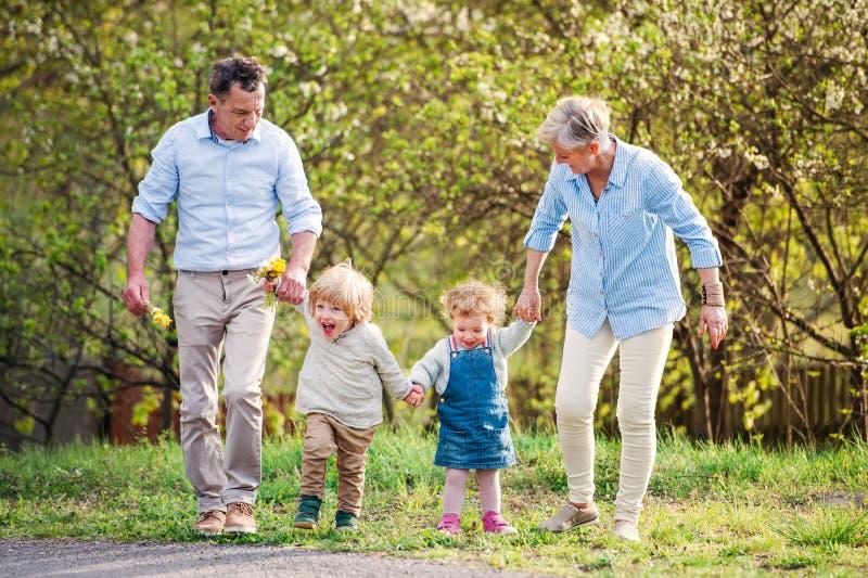 Senior grandparents with toddler grandchildren walking in nature in spring. Senior grandparents with toddler grandchildren walking in nature in spring, holding royalty free stock image