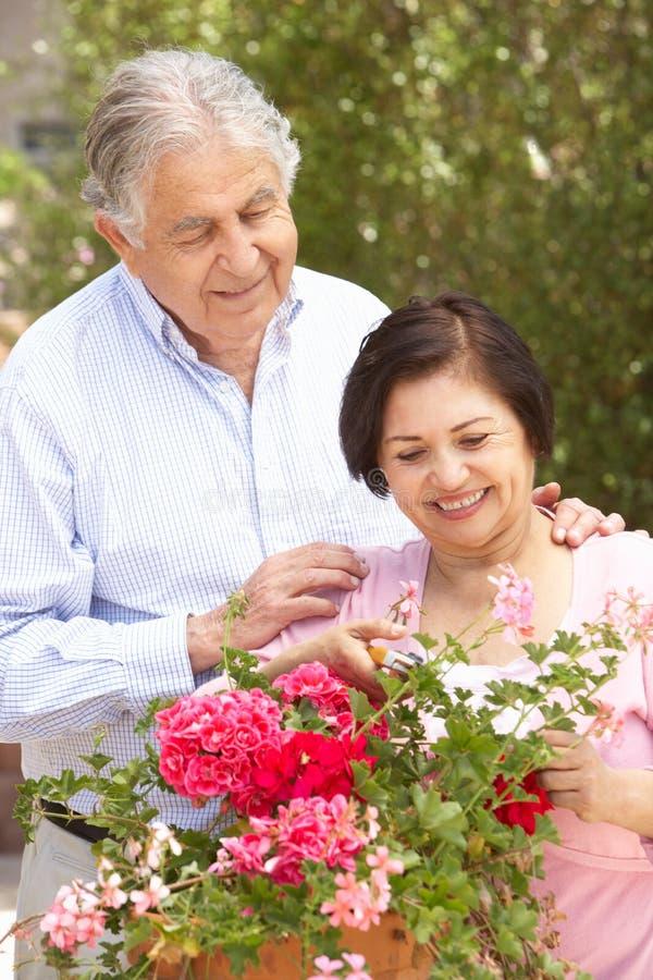 Senior Hispanic Couple Working In Garden Tidying Pots stock photo