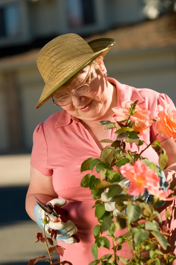 Senior lady in garden. Happy elderly lady enjoys her time in a garden stock photography