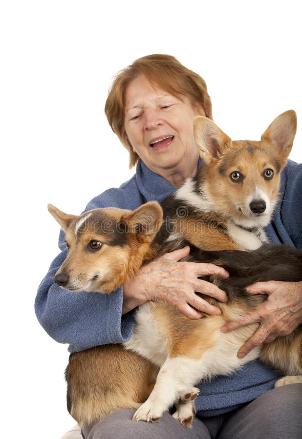 Senior Lady With Her Corgi Puppies Royalty Free Stock Images