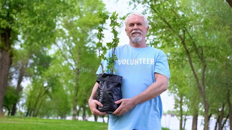 Senior male volunteer holding plant seedling smiling camera, reforestation. Stock photo royalty free stock image