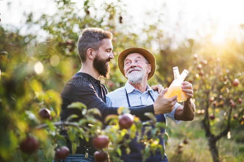 A senior man with adult son holding bottles with cider in apple orchard in autumn. A senior men with adult son holding bottles with cider in apple orchard in royalty free stock photography