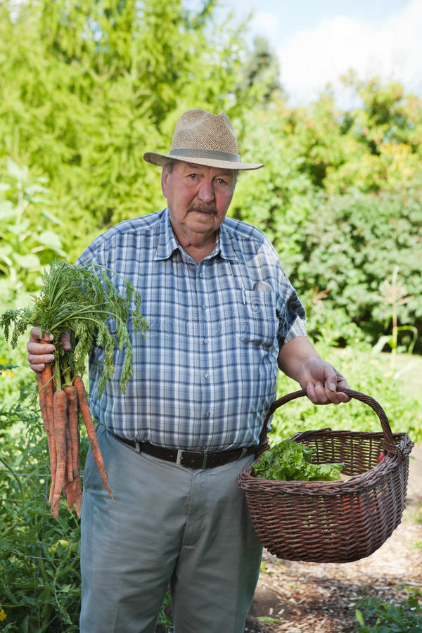 Download Senior Man With Basket Of Vegetables Stock Image - Image of mature, nature: 21777587