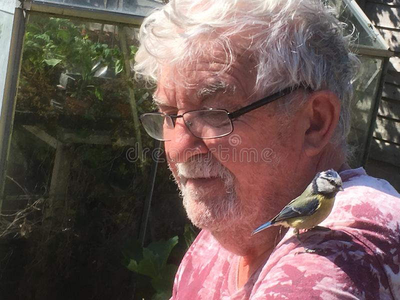 Senior man with bird on shoulder. stock image