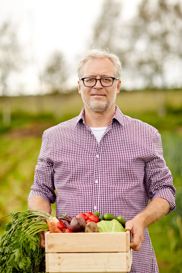 Senior man with box of vegetables on farm. Farming, gardening, agriculture, harvesting and people concept - senior man with box of vegetables at farm stock image