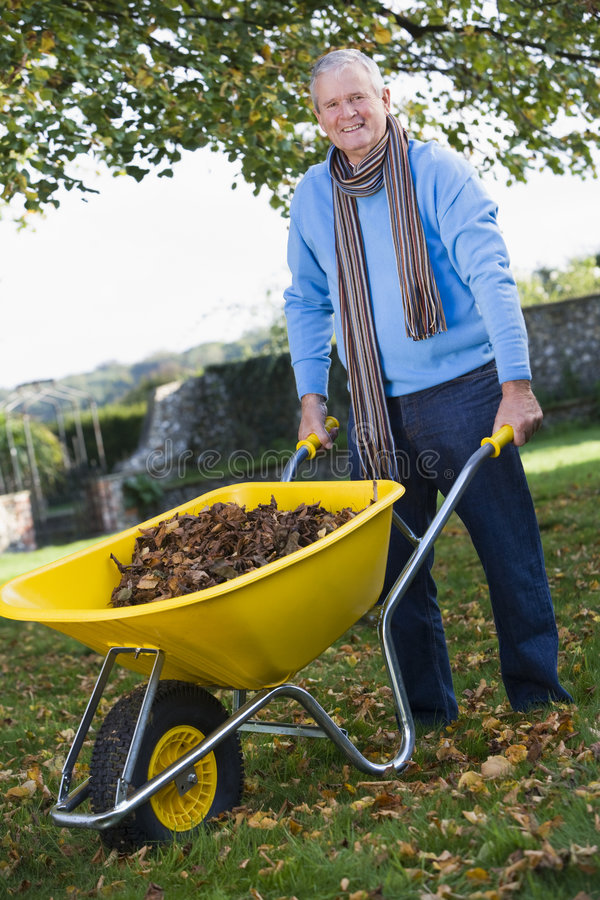 Download Senior Man Collecting Leaves In Wheelbarrow Stock Photo - Image: 5308814