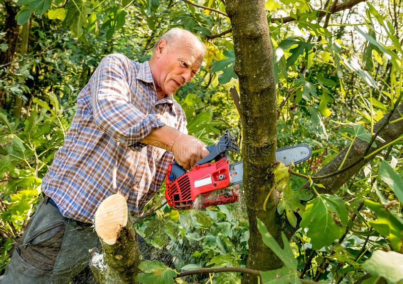 Senior man cutting tree with chainsaw stock image