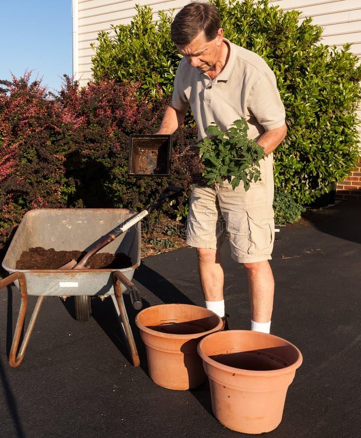 Download Senior Man Digging Soil In Wheelbarrow Stock Images - Image: 24737764