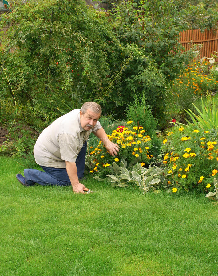 Senior man in a garden. Senior man, looking after a flowers stock images