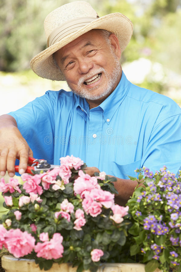 Senior Man Gardening stock photos