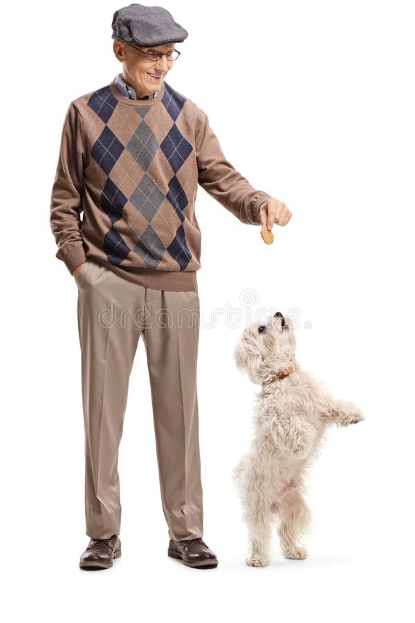 Free Senior Man Giving A Treat To A Little White Dog Standing On Back Paws Royalty Free Stock Photo - 138557045