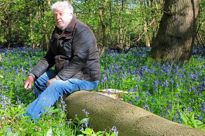 Senior man happy and peaceful in a bluebell wood. Senior man sitting on a log in a forest of wild bluebell flowers. Thinking and resting. Man is relaxed and stock photo