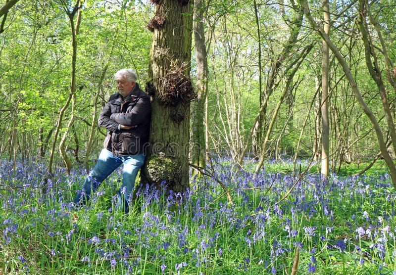 Senior man happy and peaceful in a bluebell wood. Senior man happy and relaxed on his own in a wood covered in bluebells during the springtime. Leaning against stock photos
