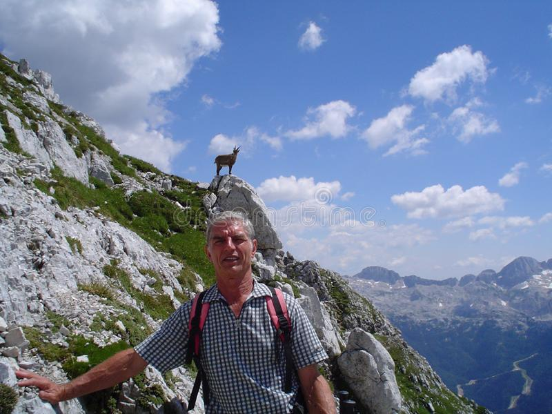 Senior man in the mountains with chamois behind stock image